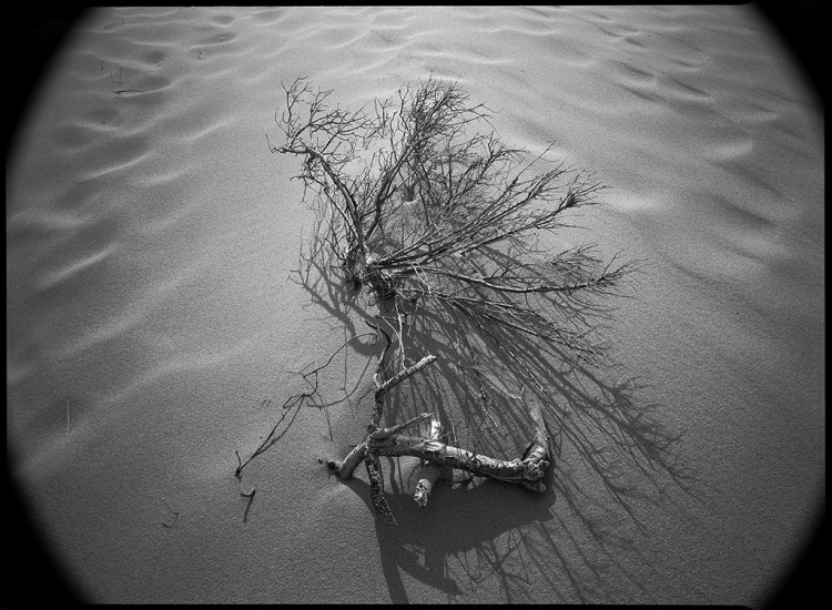 Cape Cod Dunes, 1980 © David Ulrich