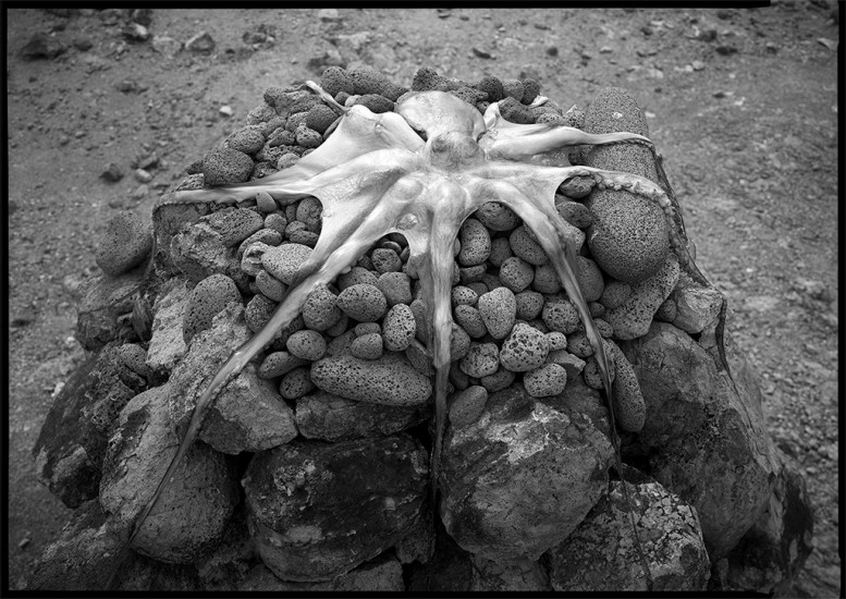 He'e (Octopus), Kanaloa Shrine, Kaho'olawe, HI 1994 © David Ulrich