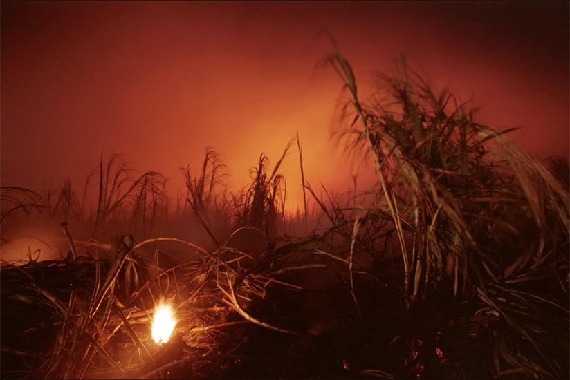 Cane Fire, Paia, Maui, HI 2000 © David Ulrich