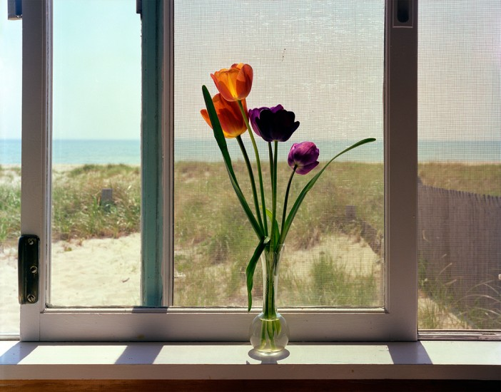 Tulips, Cape Cod, 1981 © David Ulrich